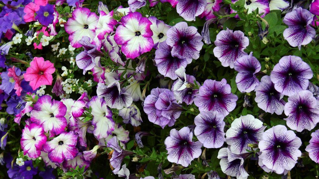 5 Ways to Make Gardening Easier 1